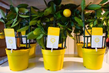 Bjørk ønsker å gi folk en opplevelse med plantene sine.