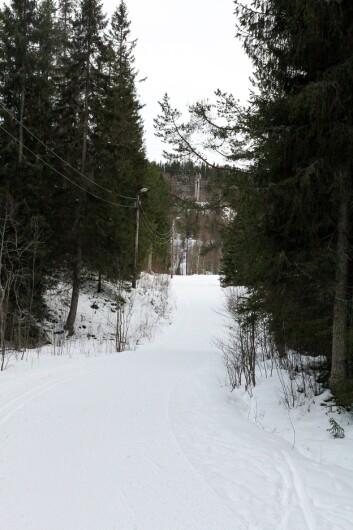 **Bekymret for naturtap:** Leder i Naturvernforbundet i Trondheim, Gaute Dahl er bekymra for at byen sluker naturen.