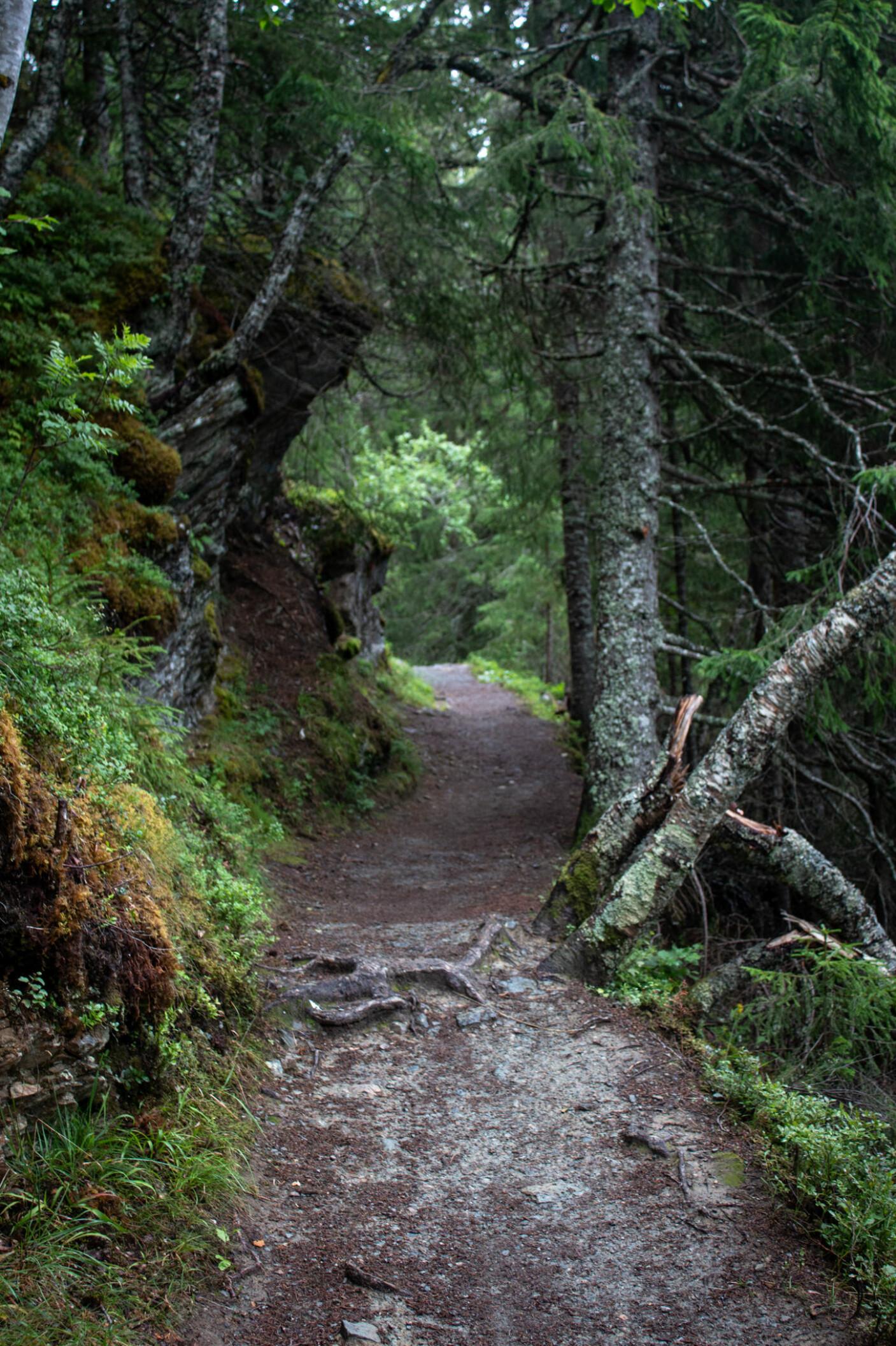 <b>NÆR NATUR: </b>Oppover Byåsen finner du dyp skog, snirklete stier og mange hvileplasser.